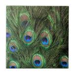 Plumas del pavo real azulejo cerámica