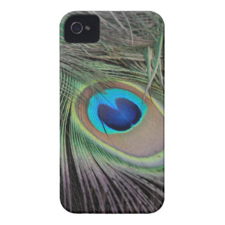 Plumas del pavo real Case-Mate iPhone 4 protectores