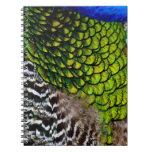 Plumas del pavo real cuaderno