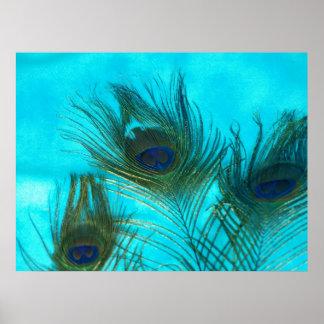 Plumas del pavo real de la aguamarina póster
