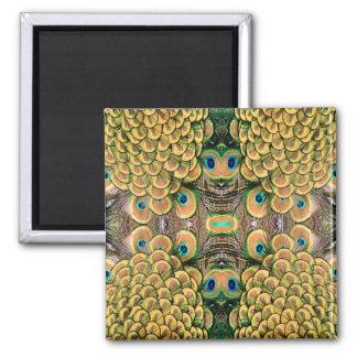 Plumas del pavo real del verde esmeralda y del oro imán cuadrado