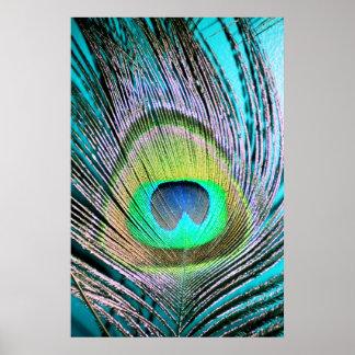 Plumas del pavo real en la turquesa póster