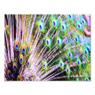 Plumas del pavo real fotografía