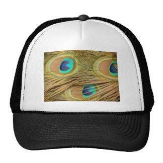 Plumas del pavo real gorras