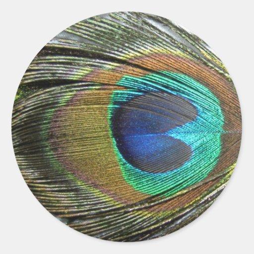 Plumas del pavo real etiqueta redonda