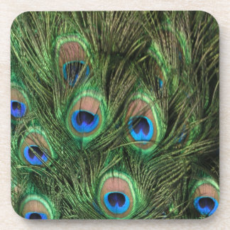 Plumas del pavo real posavaso