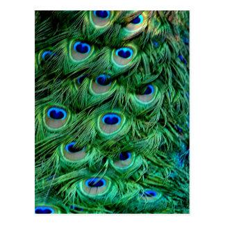 Plumas del pavo real postal