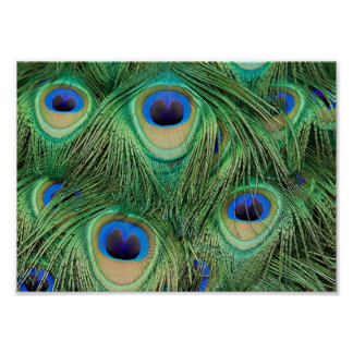 Plumas del pavo real - poster