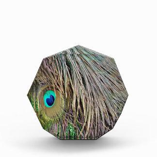 Plumas del pavo real que estrallan colores