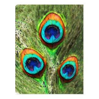 Plumas del pavo real tarjetas postales