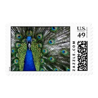 Plumas del penacho de los sellos del plumaje del