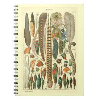 Plumas del vintage note book