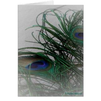 Plumas elegantes pálidas del pavo real del © P Tarjeta De Felicitación