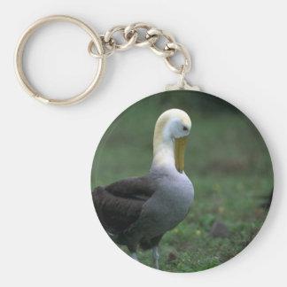 Plumas Preening agitadas del albatros Llavero