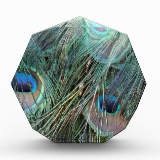Plumas profundas del pavo real del color
