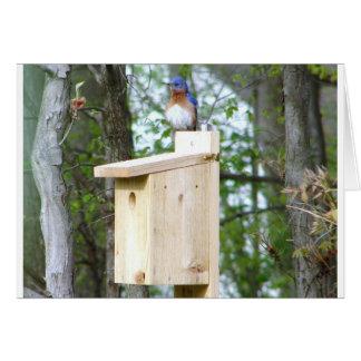 Plumas rizadas Bluebird Tarjeta Pequeña