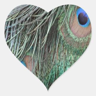 Plumas rizadas del pavo real pegatina en forma de corazón