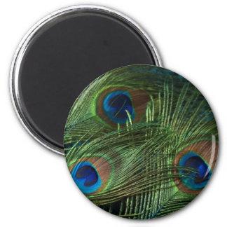 Plumas verdes del pavo real imán redondo 5 cm
