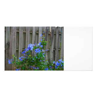 plumbago against wooden fence flower image customized photo card