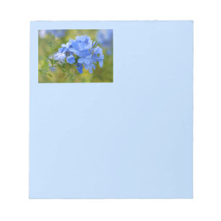 Plumbago - Blue Summer Flowers Picture Notepad