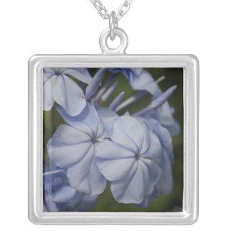 Plumbago flowers square pendant necklace