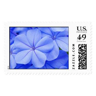 Plumbago Postage Stamp