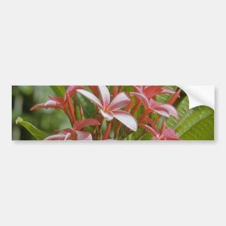Plumeria acuminata flowers bumper stickers