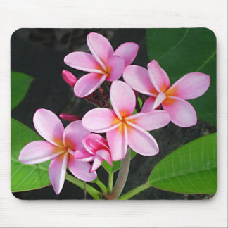 Plumeria at Virgin Gorda Bitter End Yacht Club Mouse Pad