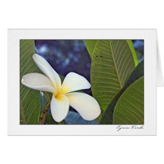 Plumeria blanco tarjeta de felicitación