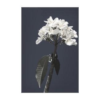 Plumeria blanco y negro lona estirada galerías