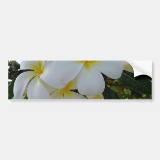 Plumeria Bumper Stickers
