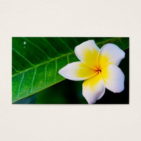 Plumeria Business Card
