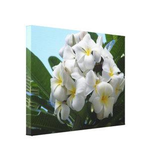 Plumeria de Hawaii Lona Envuelta Para Galerias