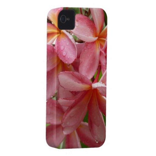 Plumeria en la caja del teléfono iPhone 4 cárcasas