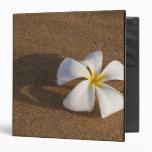 Plumeria en la playa arenosa, Maui, Hawaii, los E.