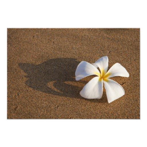Plumeria en la playa arenosa, Maui, Hawaii, los E. Fotografía