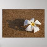 Plumeria en la playa arenosa, Maui, Hawaii, los E. Póster
