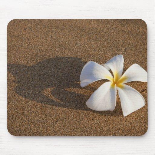 Plumeria en la playa arenosa, Maui, Hawaii, los E. Alfombrilla De Raton