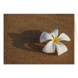 Plumeria en la playa arenosa, Maui, Hawaii, los E. Tarjeta De Felicitación