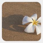 Plumeria en la playa arenosa, Maui, Hawaii, los Pegatina Cuadrada