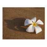 Plumeria en la playa arenosa, Maui, Hawaii, los Postales