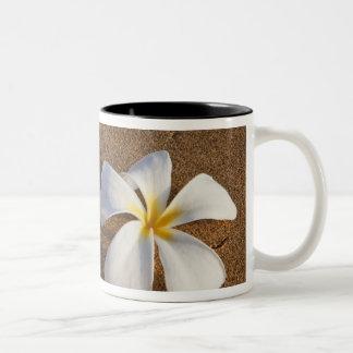 Plumeria en la playa arenosa, Maui, Hawaii, los Taza De Dos Tonos
