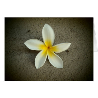 Plumeria flower captured Hawaii greeting card