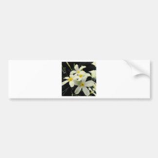Plumeria Flowers Bumper Sticker