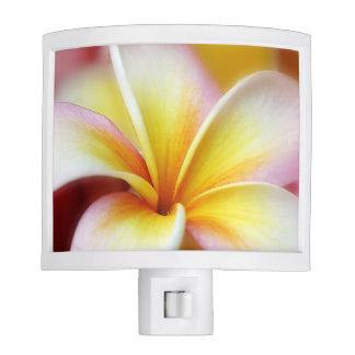 Plumeria Flowers Hawaiian Frangipani Floral Flower Night Light