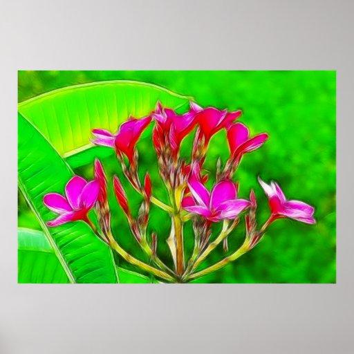 Plumeria Flowers Posters