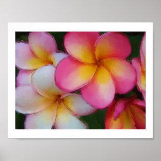 Plumeria Frangipani Flowers Watercolor Sketch Poster