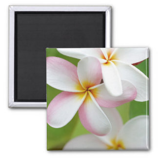 Plumeria Frangipani Hawaii Flower Customized Blank 2 Inch Square Magnet