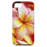 Plumeria Frangipani Hawaii Flower Customized Blank iPhone 5 Case
