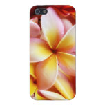 Plumeria Frangipani Hawaii Flower Customized Blank Covers For iPhone 5